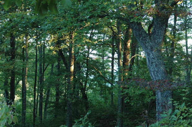 Woods on the lip of the gorge, Highlands of the Big South Fork, Fentress Co, TN (9.27.13)