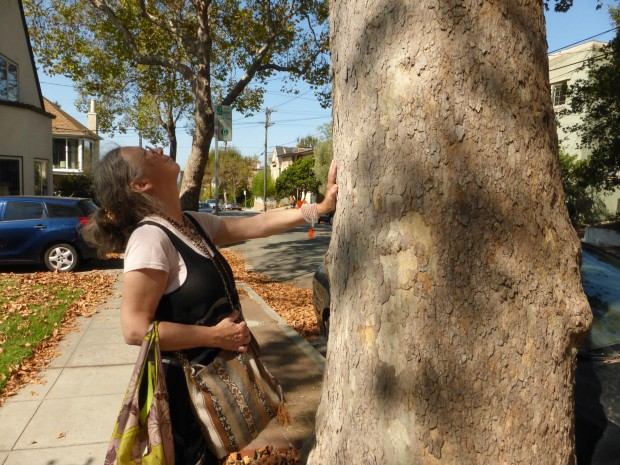 Mother Tree in the city? (9.22.14, Berkeley, CA)